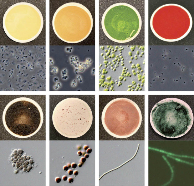 Samples of various microscopic life forms on Earth, displaying distinct colouring and spectral signatures. Image Credit: NASA